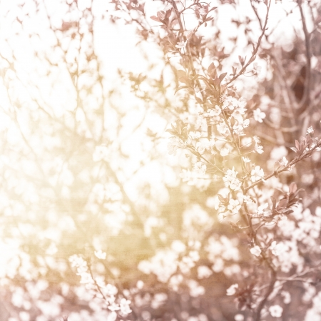 Photo of beautiful cherry blossom, abstract natural background, fine art, spring time season, apple blooming in sunny day, floral wallpaper, soft focus, little white flowers on tree branch