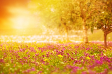 Photo of beautiful orange sunset on floral field, bright yellow sun light on glade with fresh pink flowers, blooming rural meadow, purple wildflower, spring nature, gentle landscape, springtime