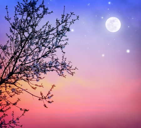 Beautiful blooming tree over dark night sky background, little white flowers on tree branch in moonlight, spring nature photo