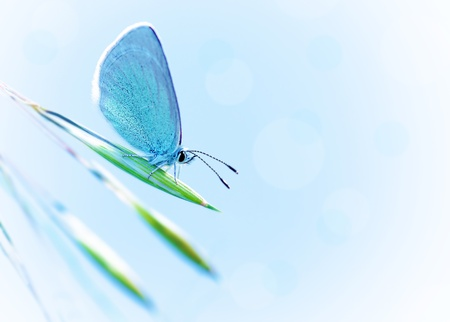 Beautiful butterfly with blue wings outdoors over blue clear sky, pretty insect on fresh plant outdoors in spring time  photo
