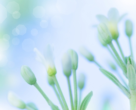shallow focus: Beautiful gentle white spring flowers over blue blur sky background, springtime nature, soft focus, fine art