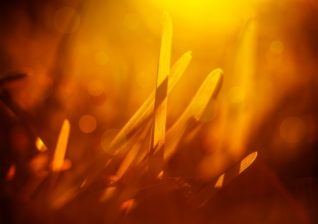shallow depth of field: Closeup photo of fresh grass in warm yellow light, natural background, spring time, orange sunrise Stock Photo