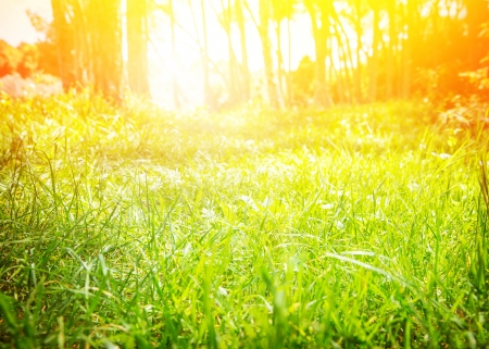 yellow earth: Fresh green grass glade with bright yellow sun beam, sunny day, spring nature, beautiful sunrise in the forest