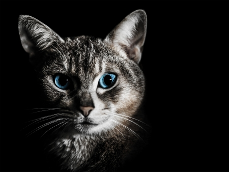 nice looking: Cat portrait Stock Photo