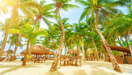 carmen: Luxury beach resort on Playa del Carmen, romantic honeymoon, beautiful bungalow on seaboard, fresh green palm tree, cozy cafe on coastland