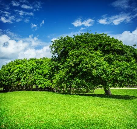 Mooi landschap, blauwe bewolkte hemel, groen gras veld, lommerrijke bomen, zonnige dag, mooi weer, zomer-concept