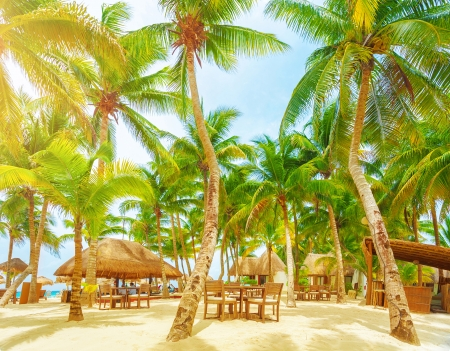 carmen: Luxury beach resort, romantic island in Atlantic ocean, comfortable bungalow, palm trees, cozy cafe on sandy seashore, summer holiday and vacation concept