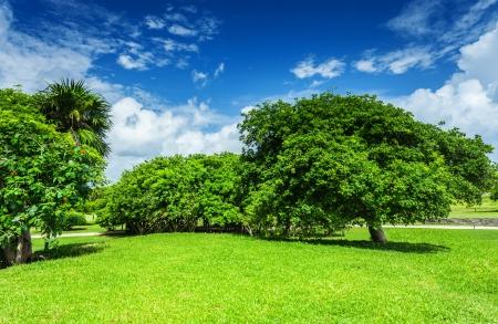 Schöne Landschaft, blauer bewölkter Himmel, grüne Rasenfläche, belaubte Bäume, sonniger Tag, gutes Wetter, Frühlingsnaturkonzept