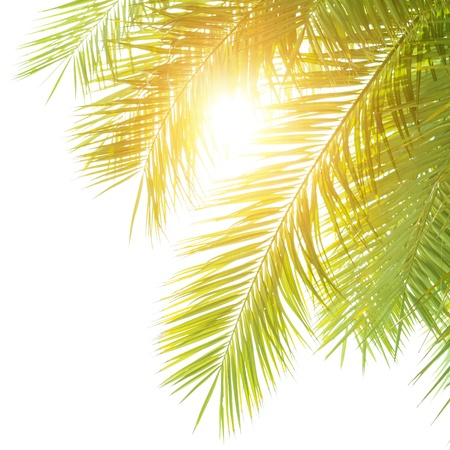 Closeup on green palm leaves border isolated on white shy background, fresh exotic tree foliage, paradise beach, summer vacation and holiday concept