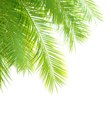 jungle foliage: Closeup on beautiful fresh green palm tree leaves border isolated on white background, exotic foliage, tropical vacation, summer holidays concept Stock Photo
