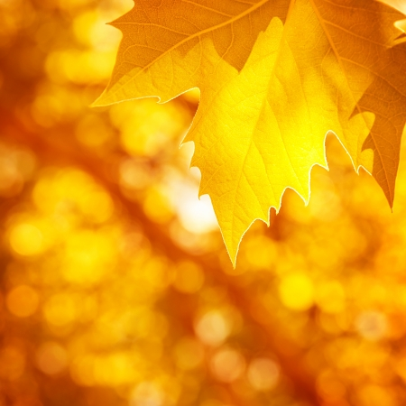 Abstract autumnal background, soft focus, dry golden maple tree leaf border, beautiful foliage, falling leaves, autumn nature concept photo