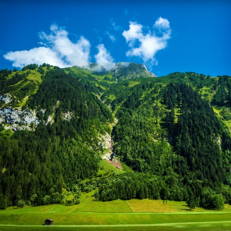 Beautiful Alpine Mountains Fresh Pine Trees Forest Green Valley Picturesque Landscape Blue