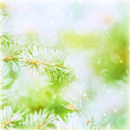 Green abstract natural background, coniferous branch covered with rime, frosty and snowy weather in winter season, Christmastime concept