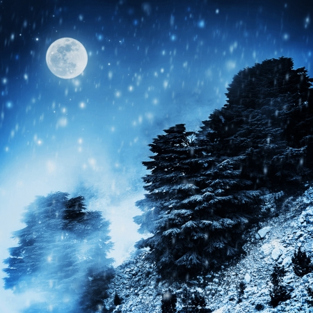 Beautiful winter landscape, big pine trees on high snowy mountain in dark night, magical moon light, Christmas time concept photo