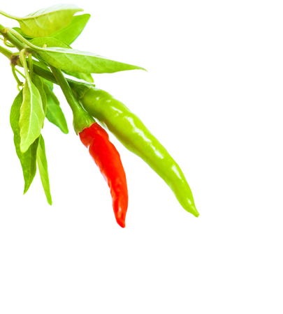 red jalapeno: Two chili pepper isolated on white background, red and green, fresh hot vegetables, traditional ingredient in mexican food
