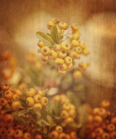 rowanberry: Rowanberry grunge background