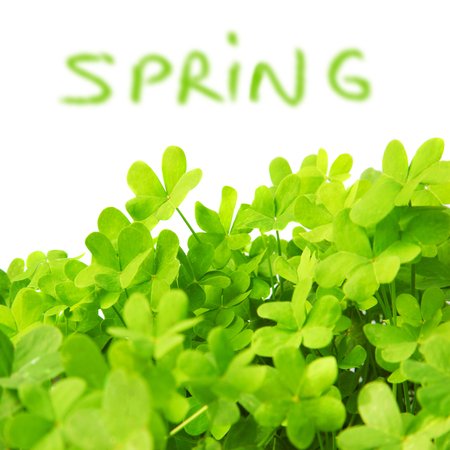 Green clover holiday border, st.Patricks day decoration isolated on white background with text space, spring time concept  photo