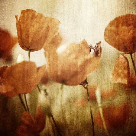 Grunge photo of beautiful red poppy flowers field, abstract floral pattern, vintage style image, natural wallpaper, fine art photo