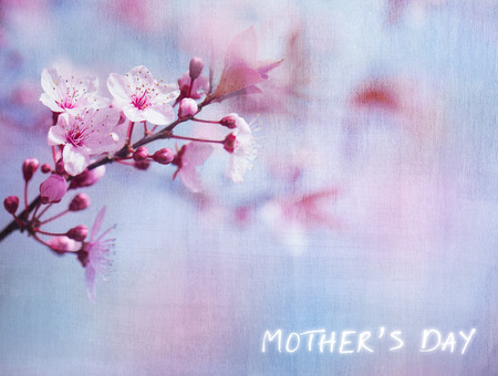 Mothers day greeting card, beautiful floral textured background, fresh gentle cherry tree blossom, greeting card for mothers day, spring season, beauty of nature concept photo