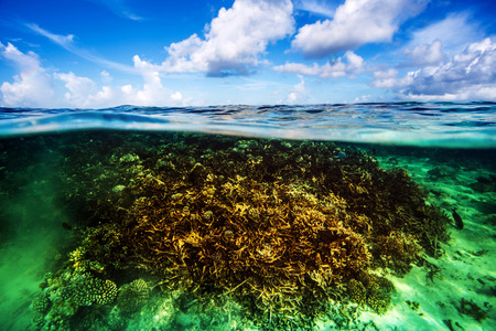 Beautiful coral garden underwater, diving on Maldives, blue cloudy sky, turquoise water, luxury summer vacation, beauty of wild nature photo