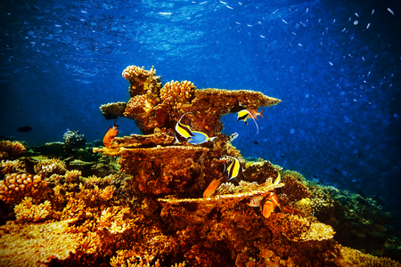 Majestic marine life, beautiful natural background, coral garden and many exotic fishes under transparent water, beauty of nature concept photo