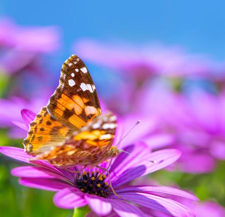 Clopseup foto van prachtige vlinder met prachtige kleurrijke vleugels zittend op paarse bloem, schoonheid van de natuur, de zomertijd seizoen Stockfoto