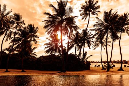 palmier: Plage tropicale sur le coucher du soleil, belle carte postale avec des palmiers silhouette sur fond de ciel nuageux, concept de vacances d'�t� de luxe