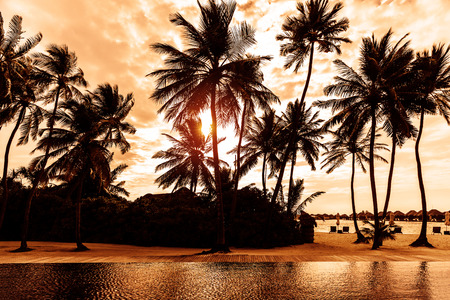 Tropical beach on sunset, beautiful postcard with palm trees silhouette on cloudy sky background, luxury summer vacation concept  Stok Fotoğraf