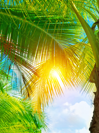 Fresh green palm tree leaves, bright yellow sun light through exotic foliage, beauty of tropical nature, summer holidays concept photo