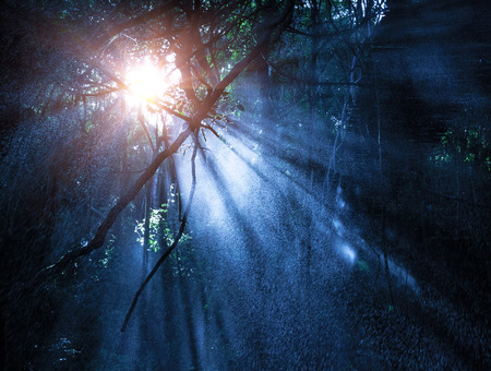 rainforest background: Fog in the mysterious rainforest, sun rays are shining through high dark trees, tropical woods, dangerous travel concept