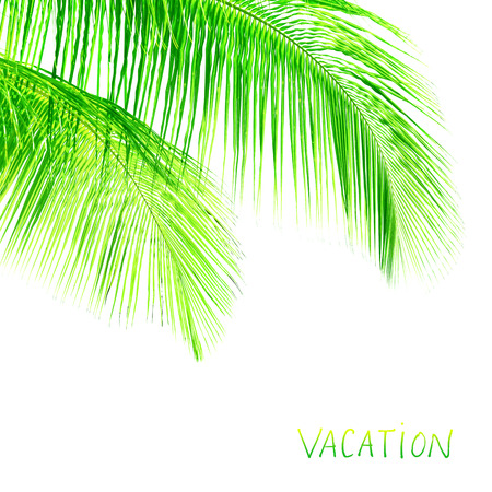 palmtree: Palm tree leaves border, fresh green exotic foliage isolated on white background, element of tropical nature, copy space, summer vacation concept