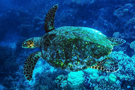 Big turtle swimming undersea, beautiful exotic water animal, wonderful marine life, summer travel and vacation concept photo