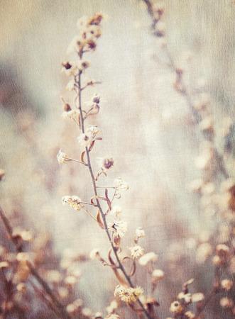 추상 꽃 배경, 아름다운 꽃의 그런 지 스타일의 사진, 미술이, 자연 배경 화면을 머 금고, 옛날 이미지