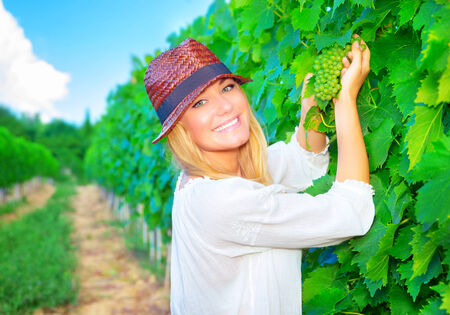 Portrait of happy smiling woman picking fresh tasty grape, working on fruit plantation, autumnal harvest season, successfully farming concept  photo