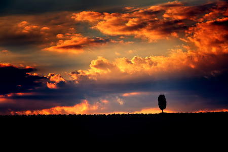 One lonely tree silhouette on dramatic sunset sky background photo
