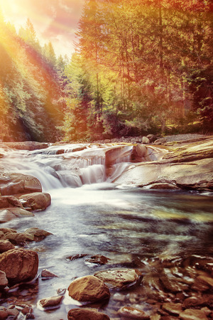 pine creek: great creek on stones in fresh green pine forest,  Stock Photo