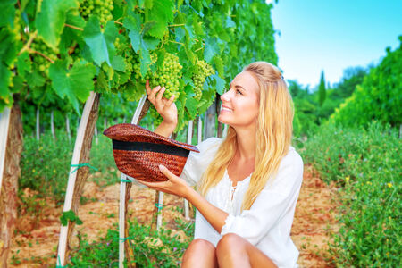 Happy girl on grape field, woman gardener sitting on the ground and picking grape bunches into the hat, organic food, enjoying great harvest, winemaking concept photo