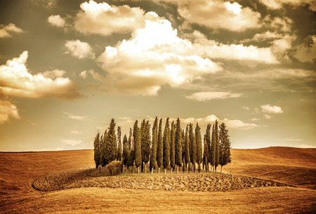 Beautiful autumn vintage landscape, several lonely trees in golden dry field, beauty of autumnal nature, Tuscany countryside panorama, Italy photo