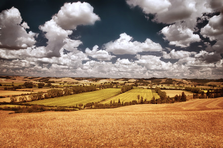 Beautiful autumn landscape, dry golden wheat fields, cloudy\ sky, autumnal harvest season, countryside panorama, agriculture\ concept