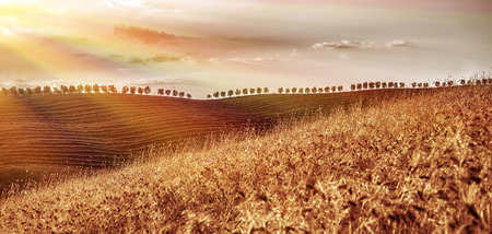 Beautiful autumn landscape, dry golden wheat fields in mild\ sunset light, autumnal harvest season, countryside panorama,\ agriculture concept