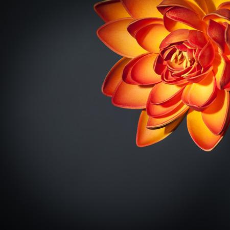 Beautiful orange lotus flower border isolated on black background, gorgeous japanese flower, exotic spa concept
