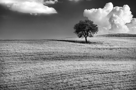 Black and white photo of a lonely tree on the hill, beautiful cloudy sky, wonderful natural landscape, conception of solitude, Tuscany, Italy Standard-Bild