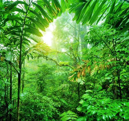 jungle foliage: Fresh green rainforest in National park of Costa Rica, wonderful wild nature of Central America