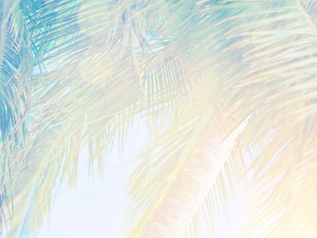 faded: Beautiful tropical vintage background, palm leaves in bright sun light, fresh green exotic tree on blue sky backdrop, summer vacation concept