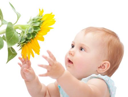Bebé lindo con el girasol aislado en el fondo blanco, adorable niña curiosa explorar gran flor amarilla