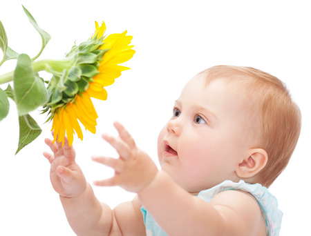 girasol: Bebé lindo con el girasol aislado en el fondo blanco, adorable niña curiosa explorar gran flor amarilla