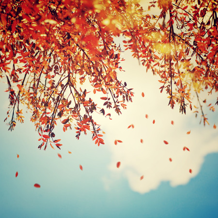 Beautiful vintage autumn background, autumnal tree border with falling down old leaves over blue cloudy sky, abstract natural background, nature at fall