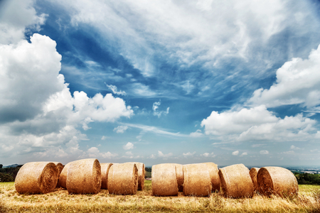 agriculture: Wheat field landscape, dry bales over cloudy fall sky background, autumnal harvest season, farming fields, beautiful golden haystack, agriculture industry, Italy Stock Photo