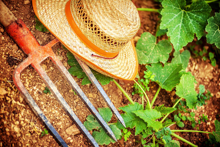 hayfork: Farmer tools in the garden, pitchfork and straw hat lying down on the ground near fresh green plants, agriculture works, autumn harvest season concept Stock Photo