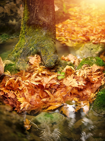 rain weather: Beautiful autumn forest, dry leaves in the puddle, calm park after rain, beauty of nature at fall, season changes, autumnal weather Stock Photo